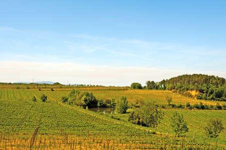 Heuvel van Toscane met Wijngaard en Vijver in de regio Chianti