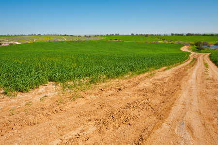 Dirt Road to the Lake among the Green Fields, Israel Spring Stock Photo - 15032647