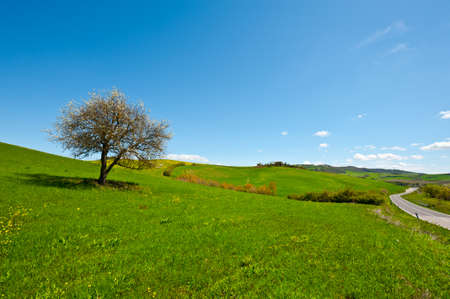 Flowering Tree and Farmhouse Surrounded by Sloping Meadows of Tuscany photo