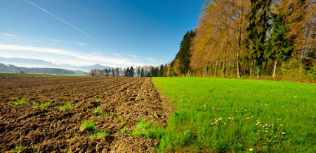 Ploughed Field near the Forest, Swiss Alps photo