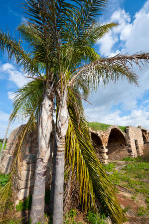 Palm on the Background of the Ruins of the Ancient Fortress , Israel. Stock Photo - 15550027