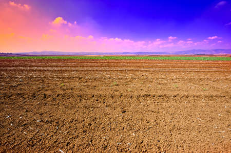 Poor Stony Soil after the Harvest in Israel, Sunset Stock Photo - 15933987