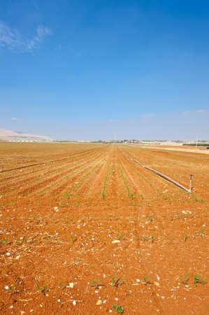Sprinkler Irrigation on a Plowed Field in Israel Stock Photo - 16002197