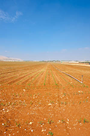Sprinkler Irrigation on a Plowed Field in Israel Stock Photo - 16002197