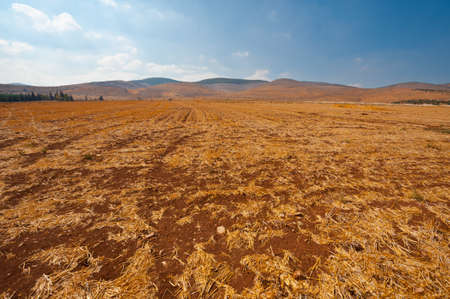 Poor Stony Soil after the Harvest in Israel Stock Photo - 16002515