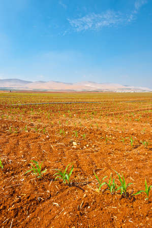 Sprinkler Irrigation on a Plowed Field in Israel Stock Photo - 16303210