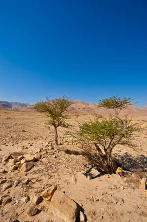 Desert on the West Bank of the Jordan River Stock Photo - 16401418