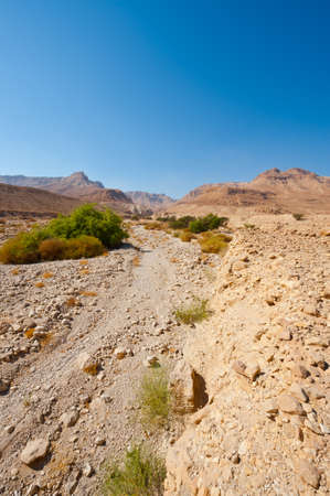 Canyon in the Judean Desert on the West Bank of the Jordan River photo