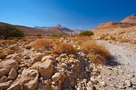 Canyon in the Judean Desert on the West Bank of the Jordan River Stock Photo - 16401429