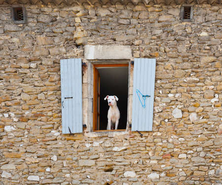 poorness: White Dog in the Window of Old Stone French Home