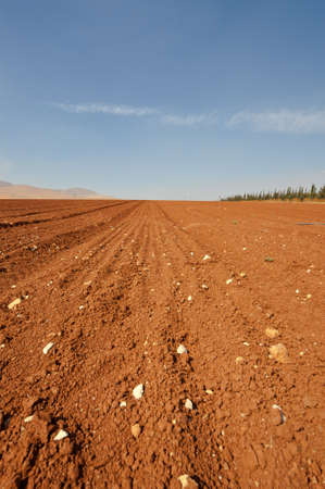 Poor Stony Soil after the Harvest in Israel Stock Photo - 16508285