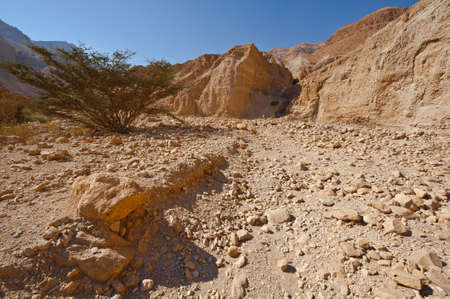 Canyon in the Judean Desert on the West Bank of the Jordan River Stock Photo - 16508339