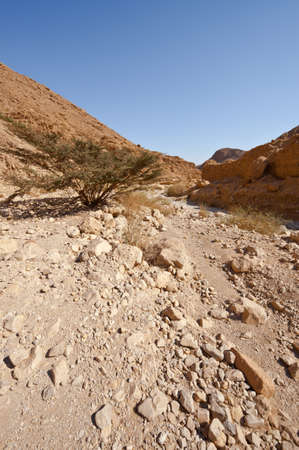 Canyon in the Judean Desert on the West Bank of the Jordan River Stock Photo - 16508460
