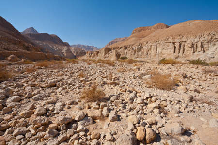 sapless: Dry Riverbed in the Judean Desert Stock Photo