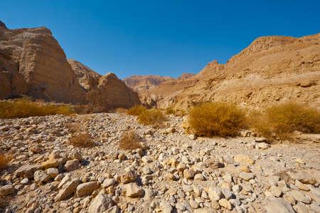 sapless: Canyon nel deserto della Giudea sulla riva occidentale del fiume Giordano Archivio Fotografico