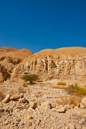 vadi: Canyon in the Judean Desert on the West Bank  Stock Photo