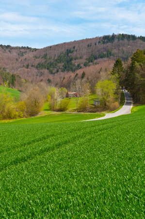 Asphalt Road Leading to the Farmhouse in the Swiss Alps photo