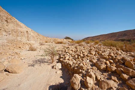 judean: View to the Dead Sea from the Judean Desert