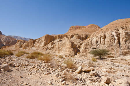 nature reserves of israel: Canyon in the Judean Desert on the West Bank of the Jordan River
