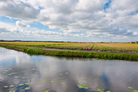 Irrigation Canal between the Fields of Tulips, Netherlands Stock Photo - 16857273