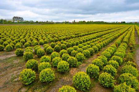 reclaimed: Agriculture on Land Reclaimed from the See, Netherlands