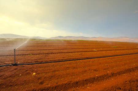 Sprinkler Irrigation on a Plowed Field in Israel Stock Photo - 16857284