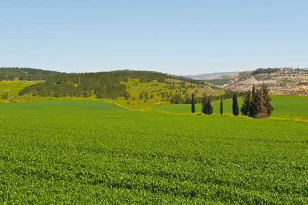 israel agriculture: Green Field in Israel, Spring