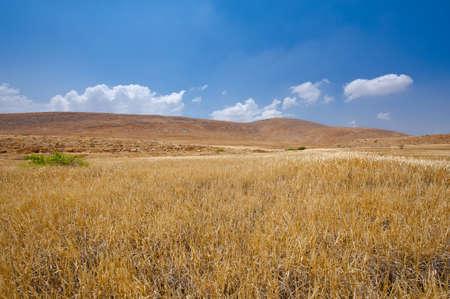 Stones in Sand Hills of Samaria, Israel Stock Photo - 16990581