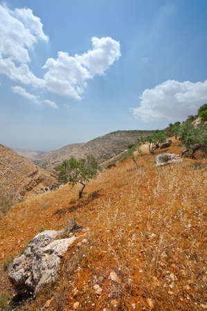 Olive Grove on the Slopes of the Mountains of Samaria, Israel Stock Photo - 16990588