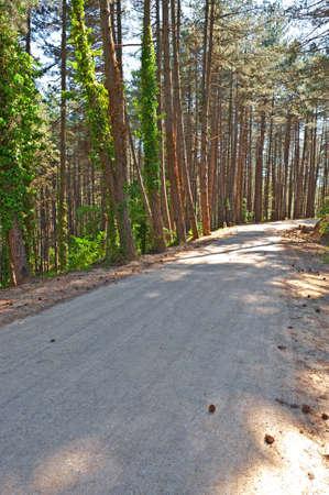 Asphalt  Road in the Forest, Italian Alps Stock Photo - 16990618