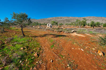 Olive Grove on the Slopes of the Judean  Mountains , Israel Stock Photo - 17220821