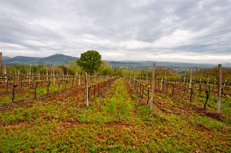 overbridge: Railroad among the Vineyard in Tuscany Stock Photo
