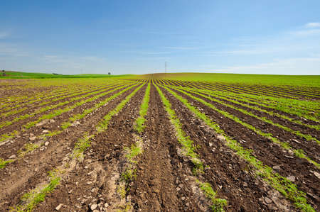 israel farming: High-voltage Power Line Passes through the Fields in Israel