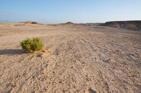 vadi: Desert on the West Bank of the Jordan River