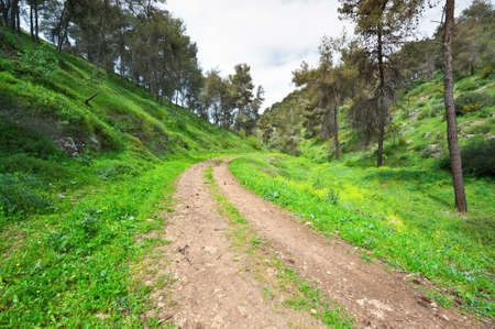 Dirt Road in the Forest of Galilee, Israel