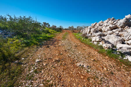 israel farming: Olive Grove on the Slopes of  the Hills of Galilee Stock Photo