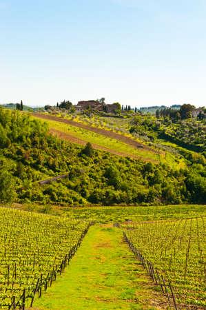 Heuvel van Toscane met wijngaard in de Chianti-regio