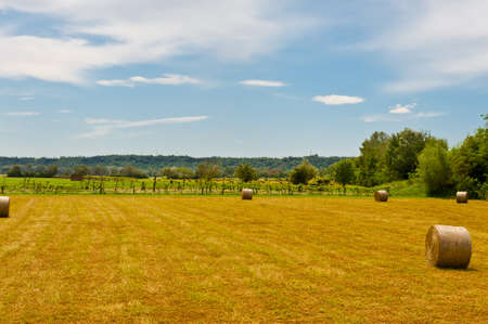 Landscape with Many Hay Bales and Vineyard photo