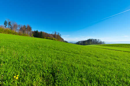 Green Pasture in the  Swiss Alps, Spring photo