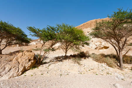 vadi: Green Trees in Desert on the West Bank of the Jordan River