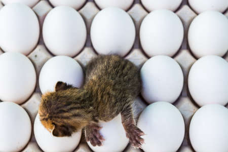 hatched: Concept of New Born Kitten Hatched from the Eggs