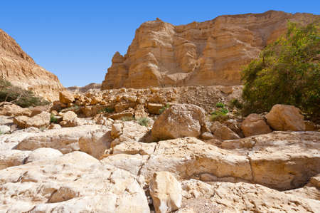 nature reserves of israel: Dry Riverbed in the Judean Desert Stock Photo