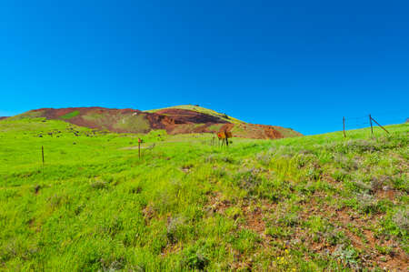 golan: Minefield in the Golan Heights, Early Spring
