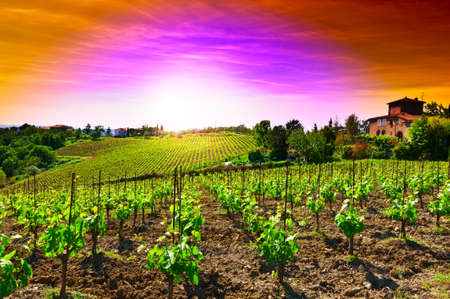 Hill of Tuscany with Vineyard in the Chianti Region, Sunset