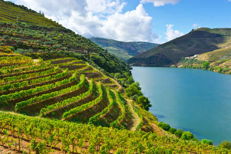 Vineyards in the Valley of the River Douro, Portugal Stock Photo - 23388673