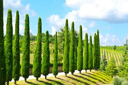 Hill der Toskana mit Weinbergen und Zypressen