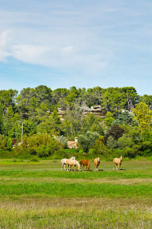 Horses Grazing on a Meadow in France