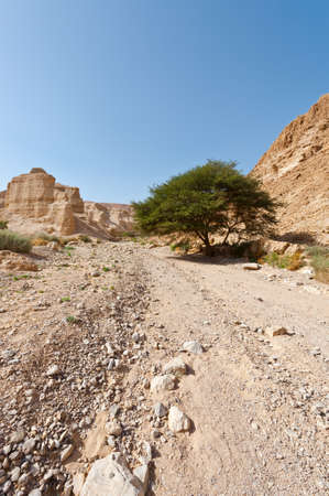 vadi: Dirt Road in the Judean Desert on the West Bank