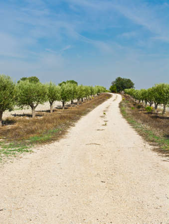 Olive Grove in Spain photo