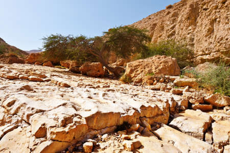 judean: Dry Riverbed in the Judean Desert Stock Photo